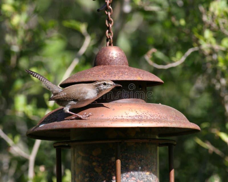 Wren su un alimentatore dell'uccello fotografia stock libera da diritti