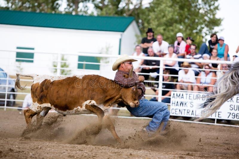 wrestling byka obrazy royalty free