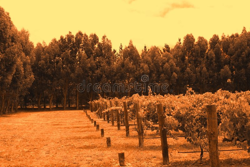 Download Wrights Bay Vines (orange) stock image. Image of fertile - 4556381