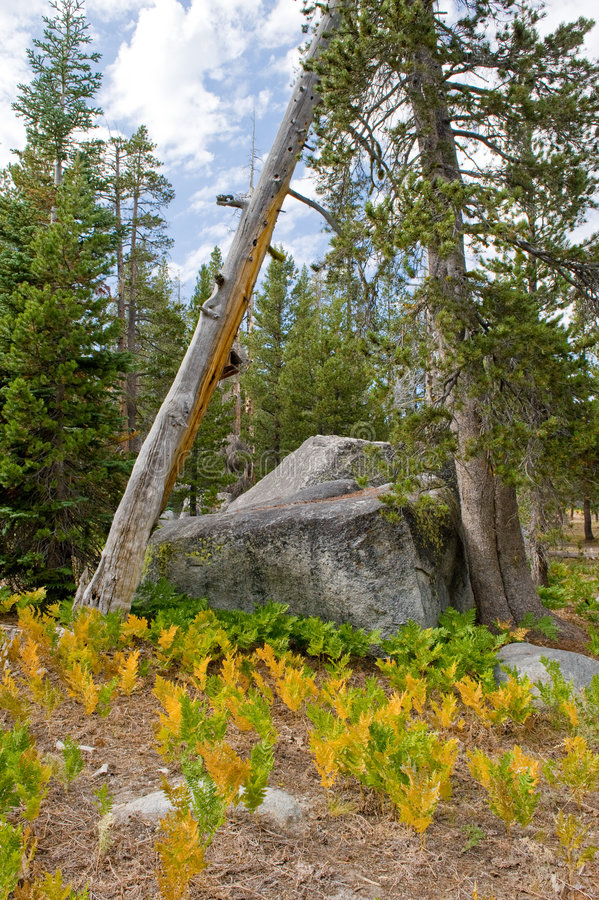 Download Wrights Lake wilderness stock image. Image of golden, wright - 7542835