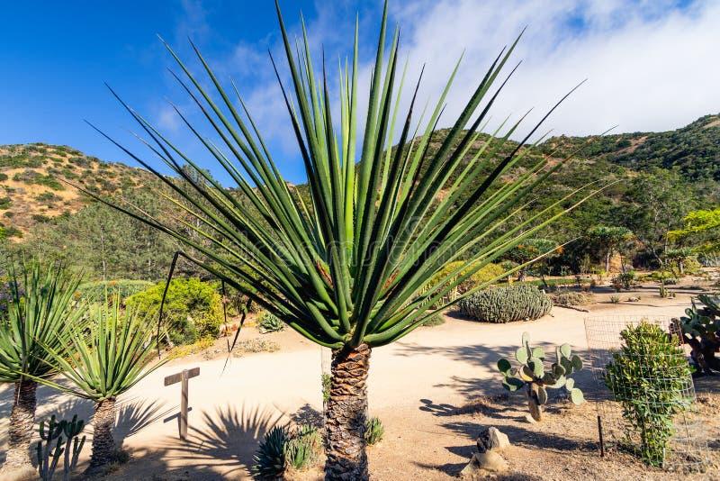 Tropical Garden, California stock photos