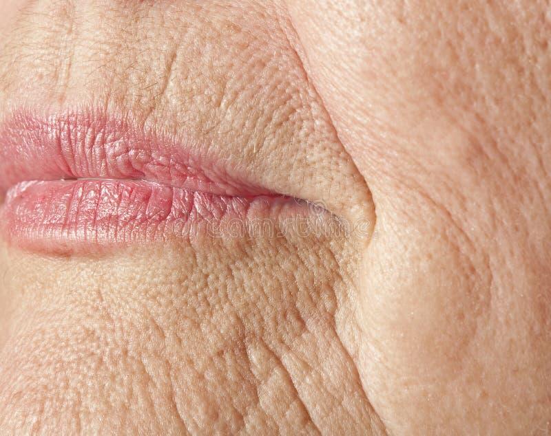 Wrinkled woman skin stock photos