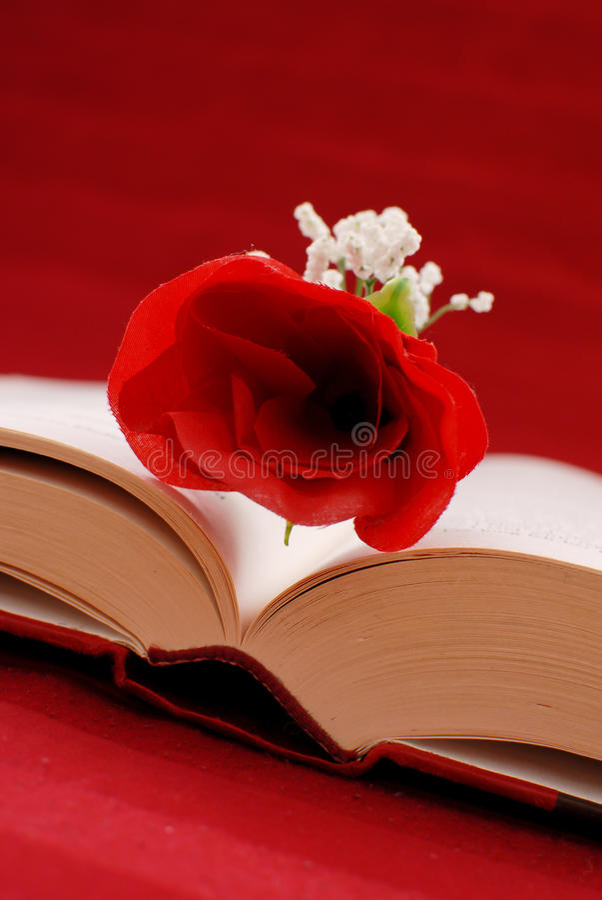 Download Writing a Romance Novel stock photo. Image of bible, novel - 22078606