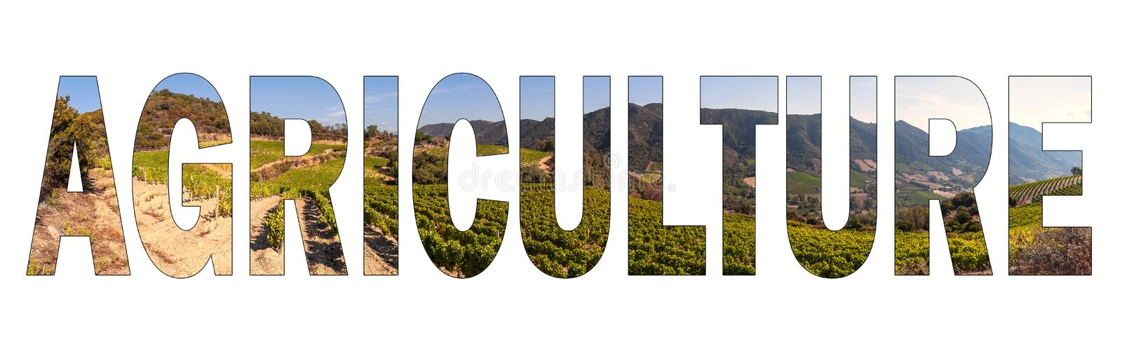 Written AGRICULTURE with background a hilly vineyard of Sardinia, Italy. royalty free stock photography