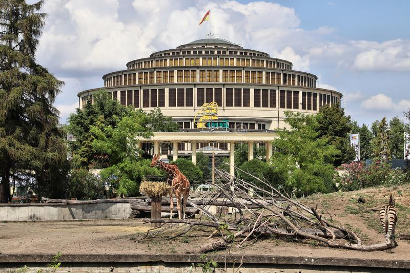 Wroclaw, Poland. JULY 27, 2019: Giraffe in Wroclaw Zoo with Centennial Hall visible in background. The hall is a UNESCO World Heritage Site royalty free stock photography
