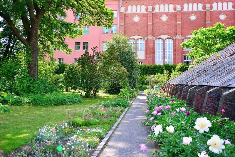 WROCLAW, POLOGNE - JUIN 2017 : Jardin botanique de Wroclaw images stock
