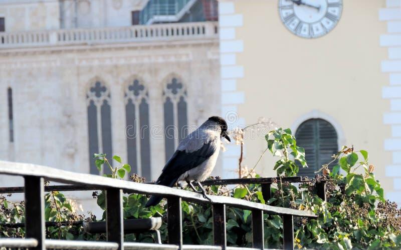 Wrona przed katedrą zdjęcie stock
