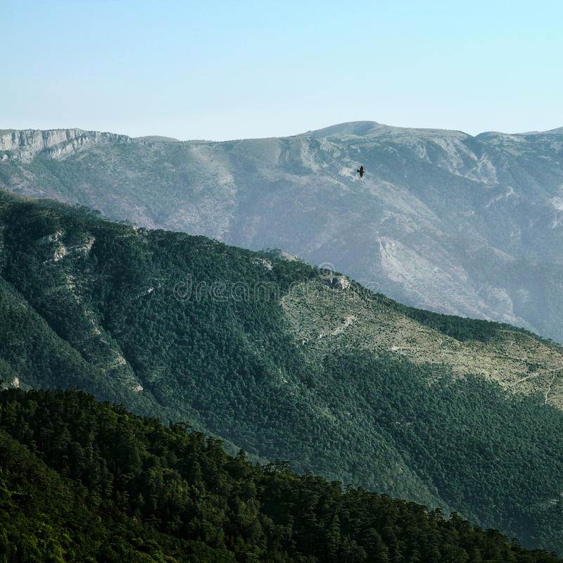 Wroni latanie nad wzgórzami zdjęcie royalty free