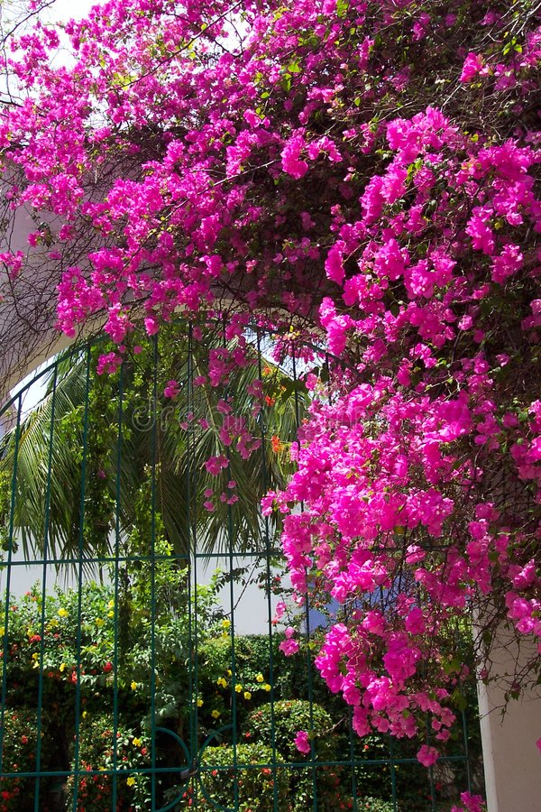 wrota podwórzowy huatulco Meksyku zdjęcie royalty free