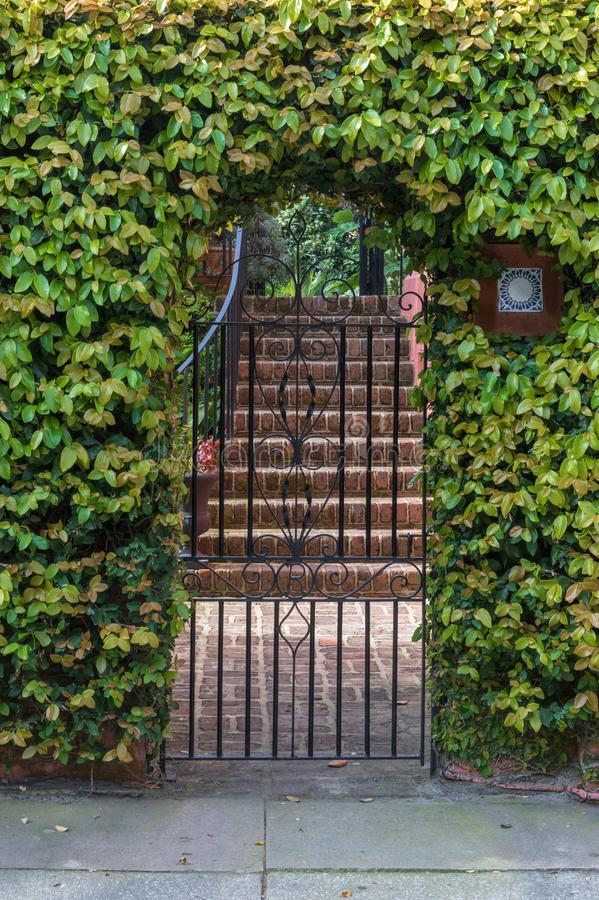 Wrought Iron Gate Entrance to Courtyard. One of Charleston`s iconic arched iron gates surrounded by green ivy entering an outdoor courtyard in the holy city in stock images