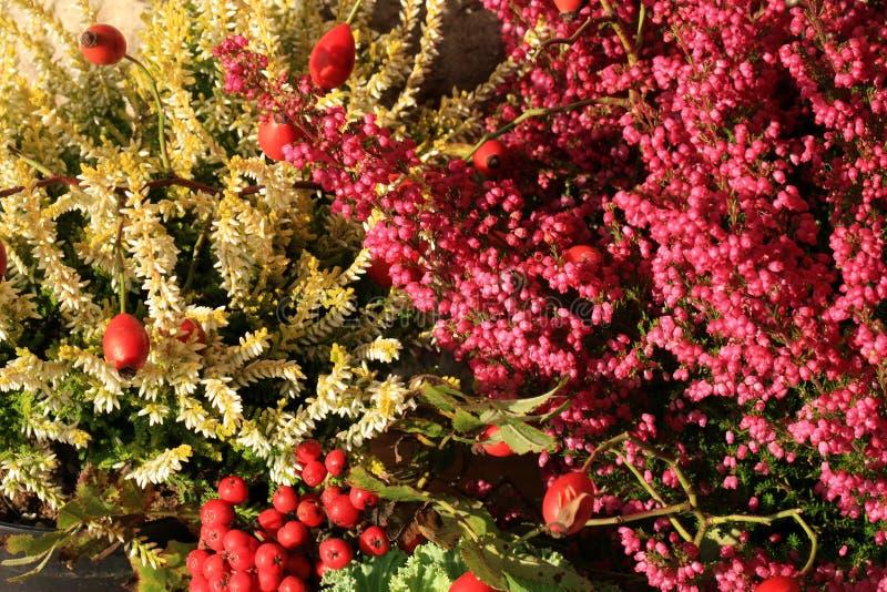 Wrzos jesieni kwiaty obraz stock