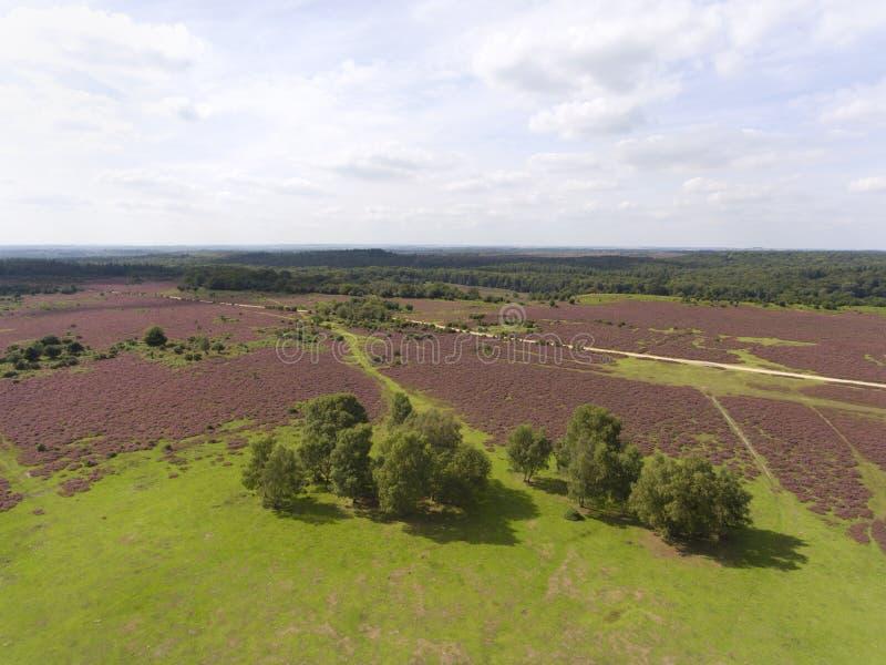 Wrzosowiska gruntowego panoramicznego widok z lotu ptaka Nowy las, UK obraz royalty free