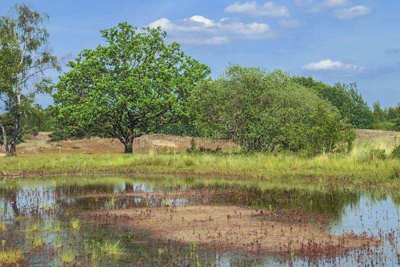 Wrzosowiska pole z odległym lasem zdjęcie royalty free