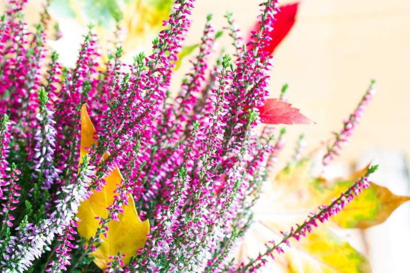 Wrzosu i jesień liści abstrakcjonistyczny kwiecisty życie wciąż zdjęcie royalty free