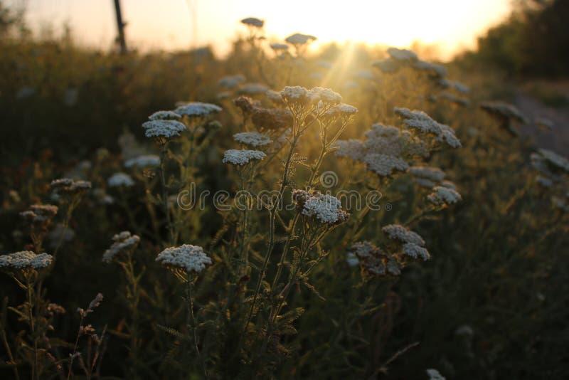 3 wschód słońca obrazy stock