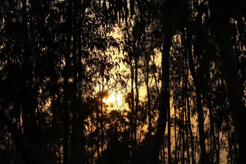 Wschód słońca! obraz stock