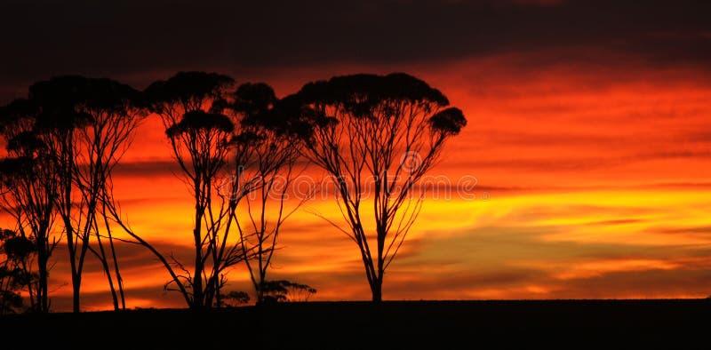 wschód słońca buszu fotografia stock