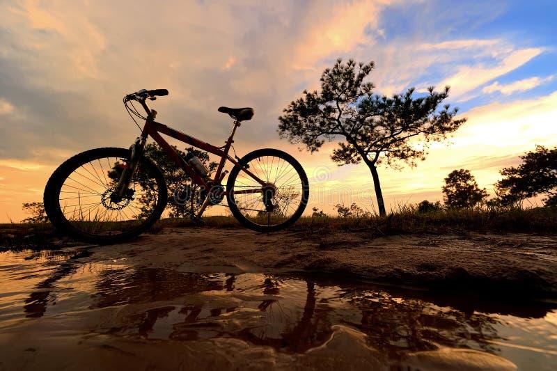 Wschód słońca i drzewo zdjęcie royalty free