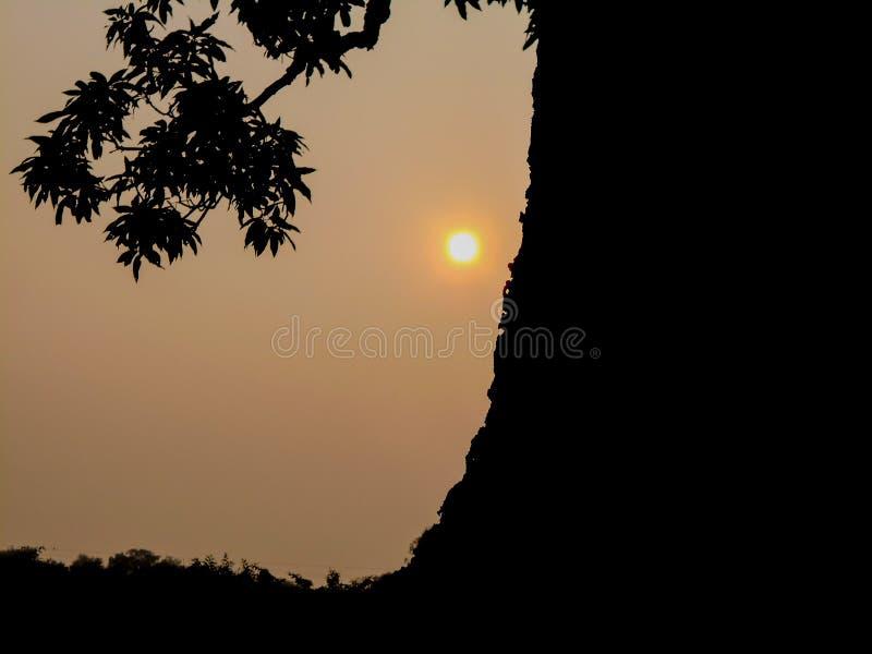 Wschód słońca i drzewo fotografia stock