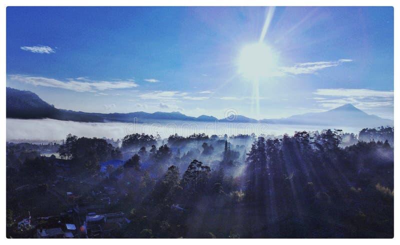 Wschód słońca i sosna lasu lembang zdjęcia royalty free