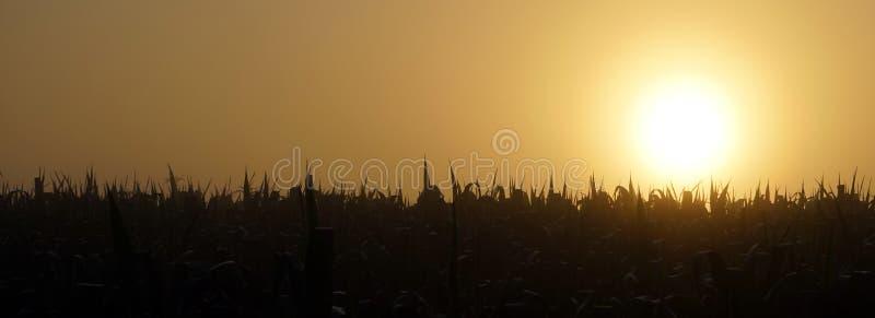 Wschód słońca i trzcina zdjęcia stock