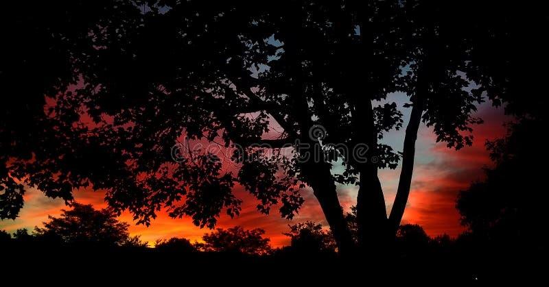 wschód słońca mgłowy krajobrazowy lato światła słonecznego wschód słońca zdjęcia royalty free
