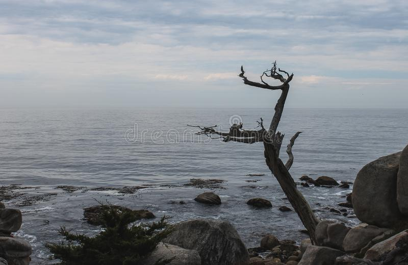 Wschód słońca na Skalistym Monterey Ca, fotografia royalty free