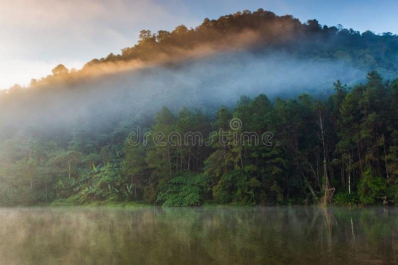 Wschód słońca na sosnowym lesie z mgłowym obraz royalty free