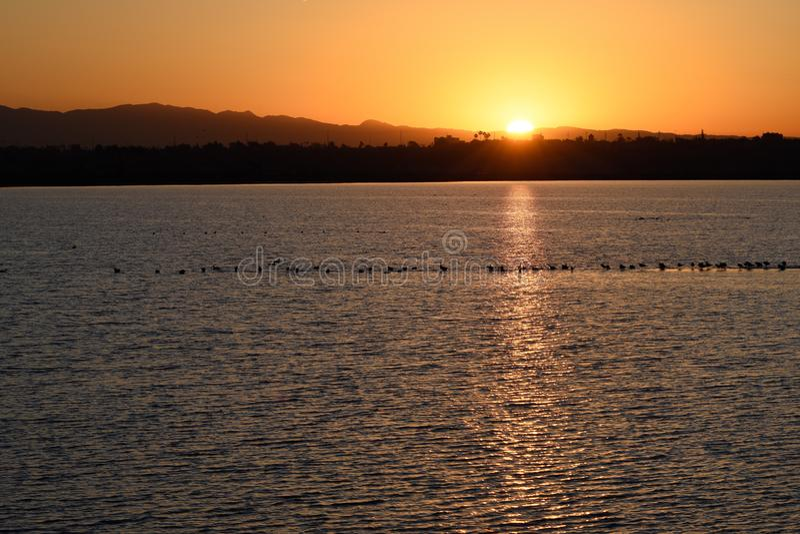 Wschód słońca nad laguną z gniazdować ptaki iść dla ranku pływania fotografia royalty free