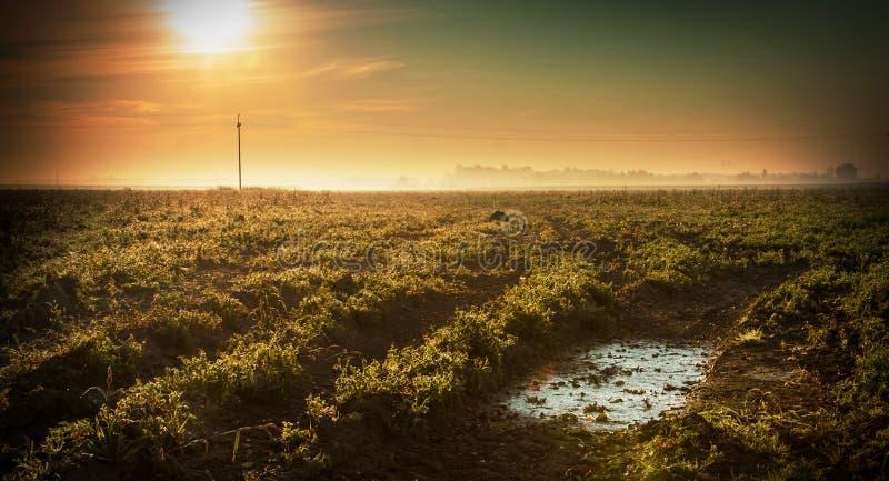 Wschód słońca nad mgławy pole - zimny jesień ranek fotografia stock