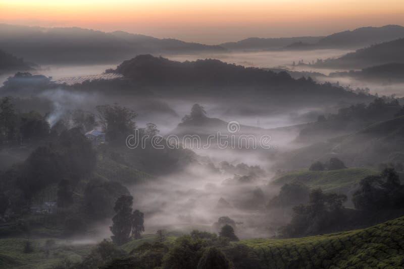 Wschód słońca przy herbacianą plantacją obrazy royalty free