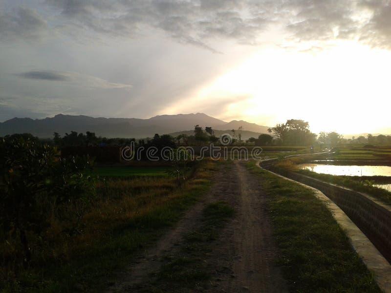 Wschód słońca przy ryżu polem obrazy stock