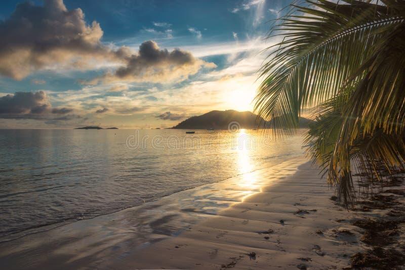 Wschód słońca przy tropikalną plażą z kokosową palmą obraz royalty free