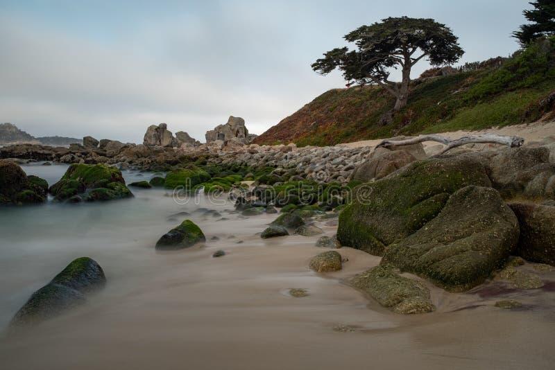 Wschód słońca przy wybrzeżem Carmel, CA, wyrzucać na brzeg strzał z samotną sosną, długi ujawnienie gładzić za wodzie obraz stock