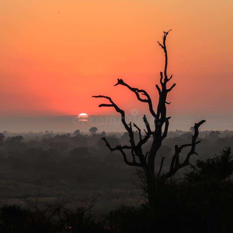 Wschód słońca Sabie rzeka obrazy royalty free