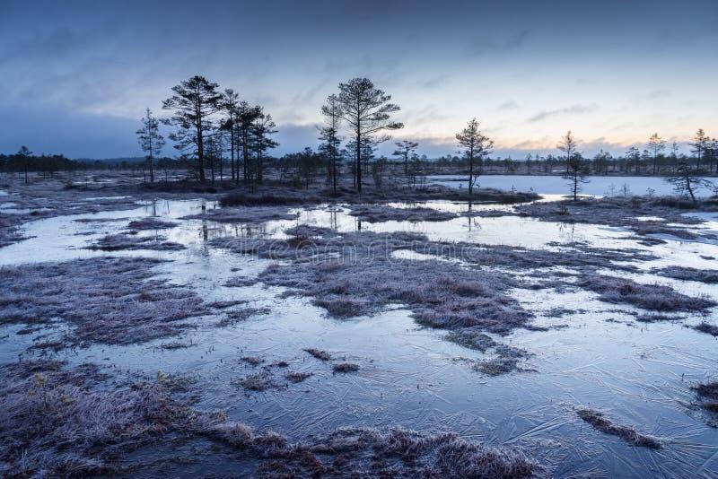 Wschód słońca w bagnie Lodowaty zimny bagno Mroźna ziemia Bagno natura i jezioro Mróz temperatury wewnątrz cumują Błękitny fen fotografia stock