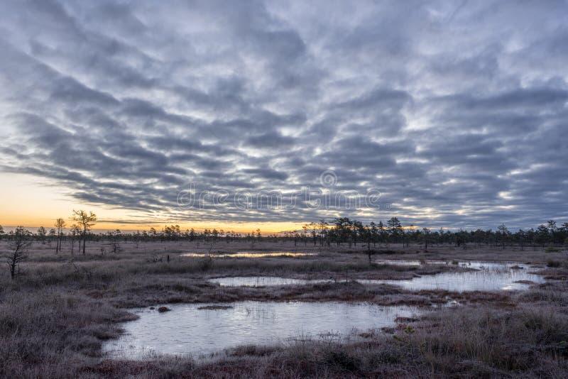 Wschód słońca w bagnie Lodowaty zimny bagno Mroźna ziemia Bagno natura i jezioro Mróz temperatury wewnątrz cumują Muskeg naturaln zdjęcie stock