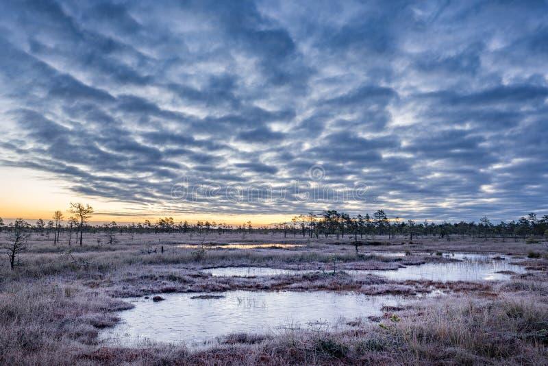 Wschód słońca w bagnie Lodowe, zimne bagno Mróz Jezioro bagienne i przyroda zdjęcie stock
