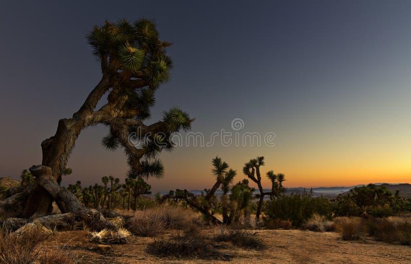 Wschód słońca W Joshua drzewie zdjęcia stock