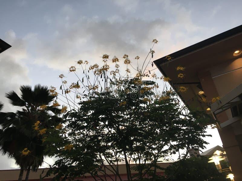 Wschód słońca w Lihue na Kauai wyspie w Hawaje zdjęcia stock