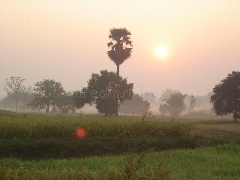 Wschód słońca w mgle zdjęcie stock
