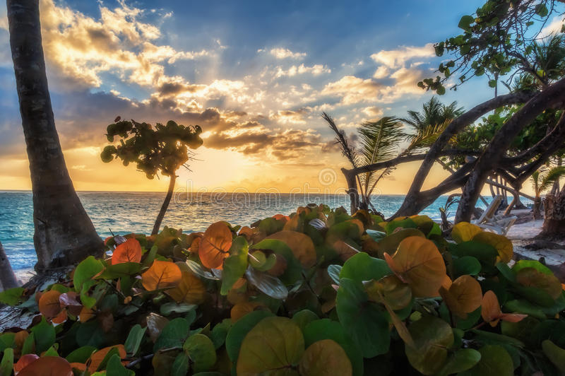 Wschód słońca w Punta Cana fotografia royalty free