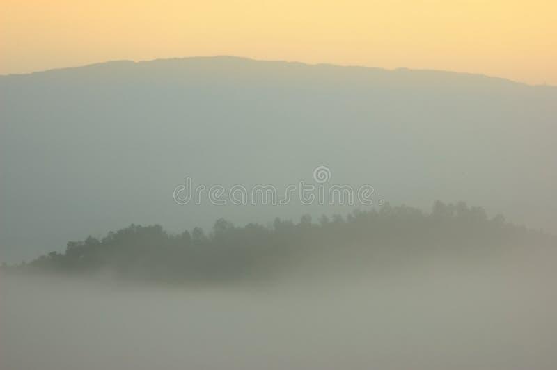 Wschód słońca w ranek mgły pokrywy sosny lasu formie Chiangma zdjęcia stock