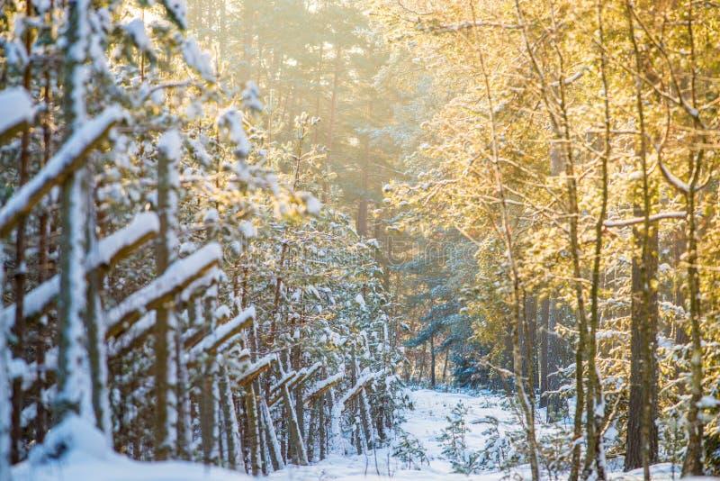 Wschód słońca w zimie, sceniczny krajobraz zdjęcie royalty free