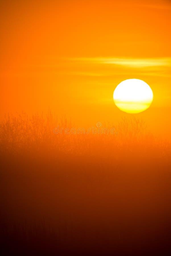 Wschód słońca z ładnym dużym pomarańczowym słońcem nad bagna zdjęcia stock