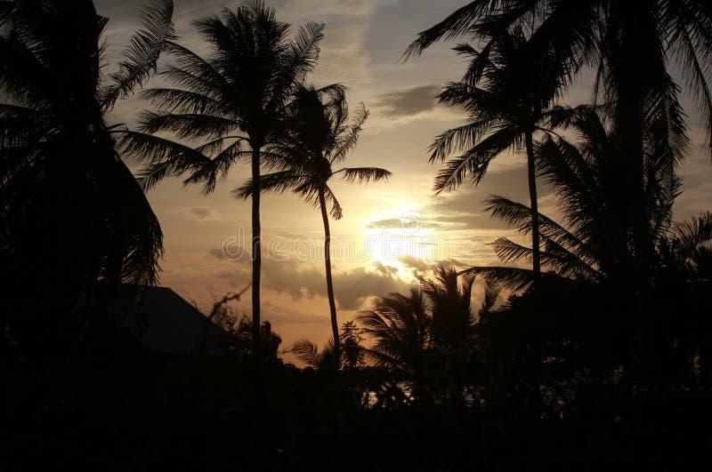 Wschód słońca z palmami w Azja zdjęcie stock