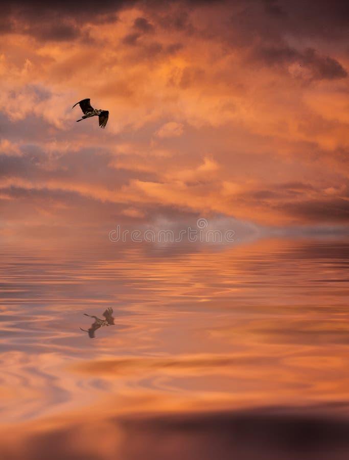 Wschód słońca z ptakiem zdjęcia royalty free