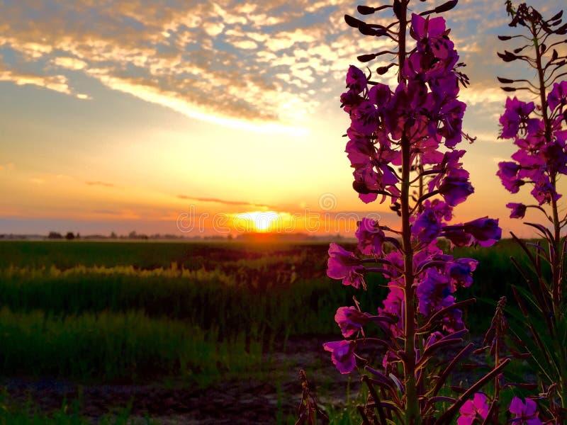 Wschodów słońca kwiaty zdjęcie royalty free