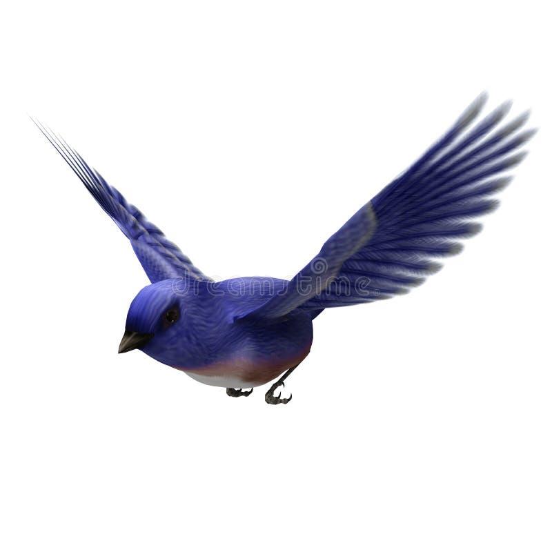 Wschodni Bluebird royalty ilustracja