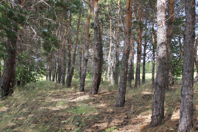 wschodniego Europe lasowej zieleni krajobraz obraz stock